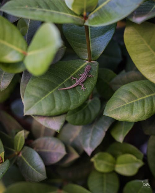 Δωρεάν στοκ φωτογραφιών με σκούρα πράσινα φυτά