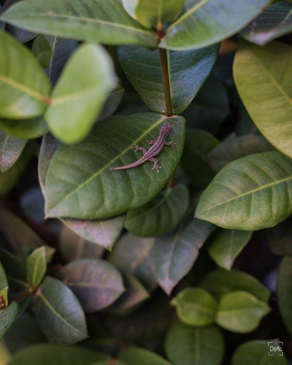 donkergroene planten