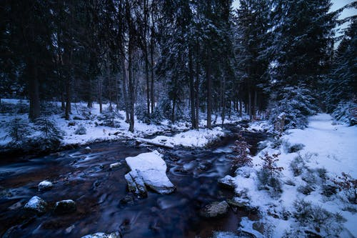 Free stock photo of dawn dusk, forest, germany, Harz