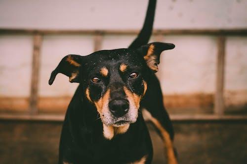 Close-Up Photo of Dog
