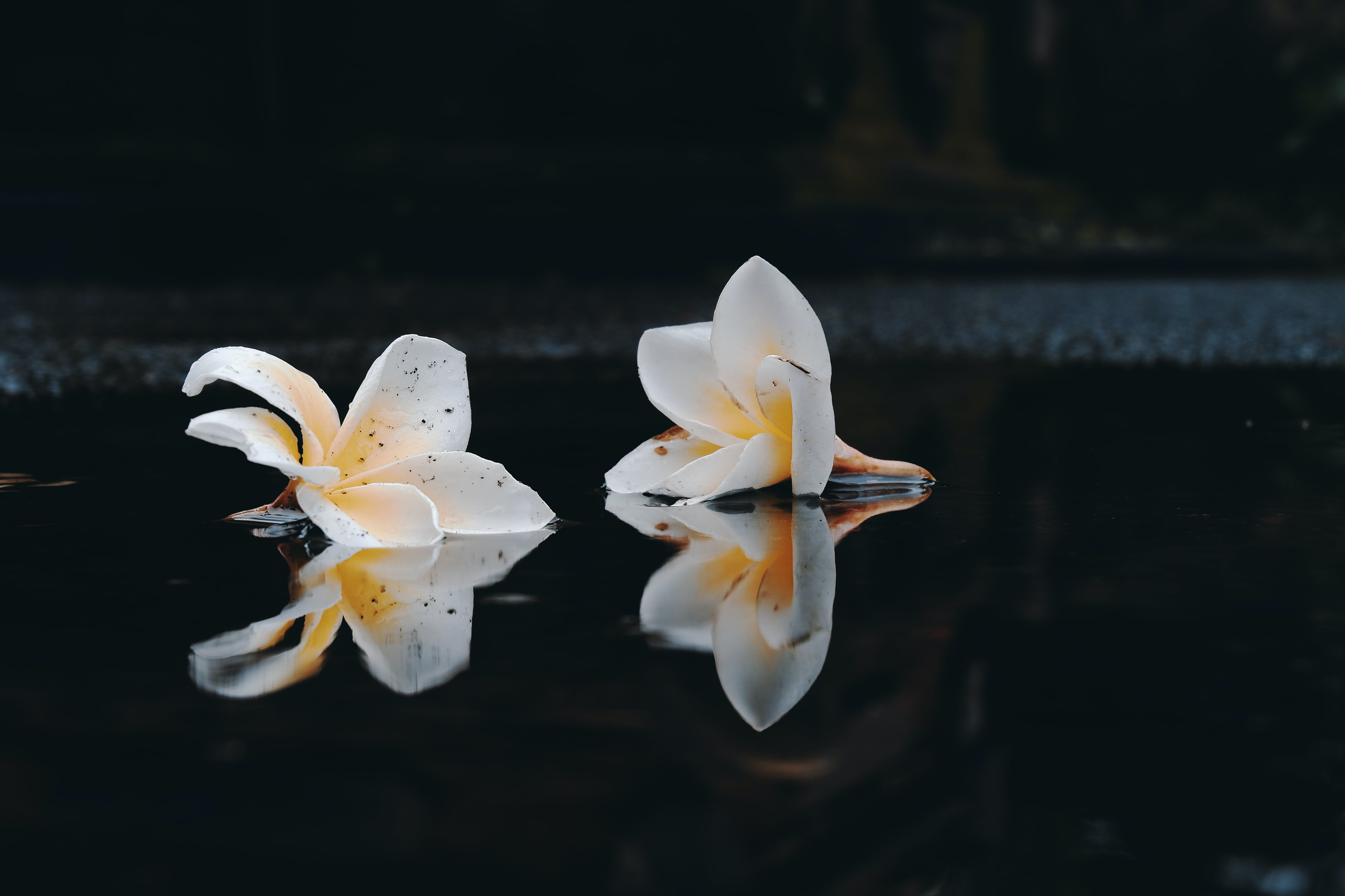 Free stock photo of after the rain, bali, balinese, flower
