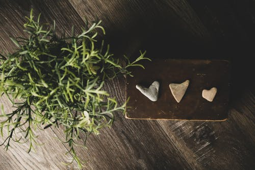 Darmowe zdjęcie z galerii z drewno, kier, miłość, roślina