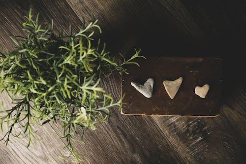 Безкоштовне стокове фото на тему «Деревина, завод, любов, серця»