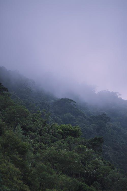 caminho pela floresta, cobertura florestal, floresta