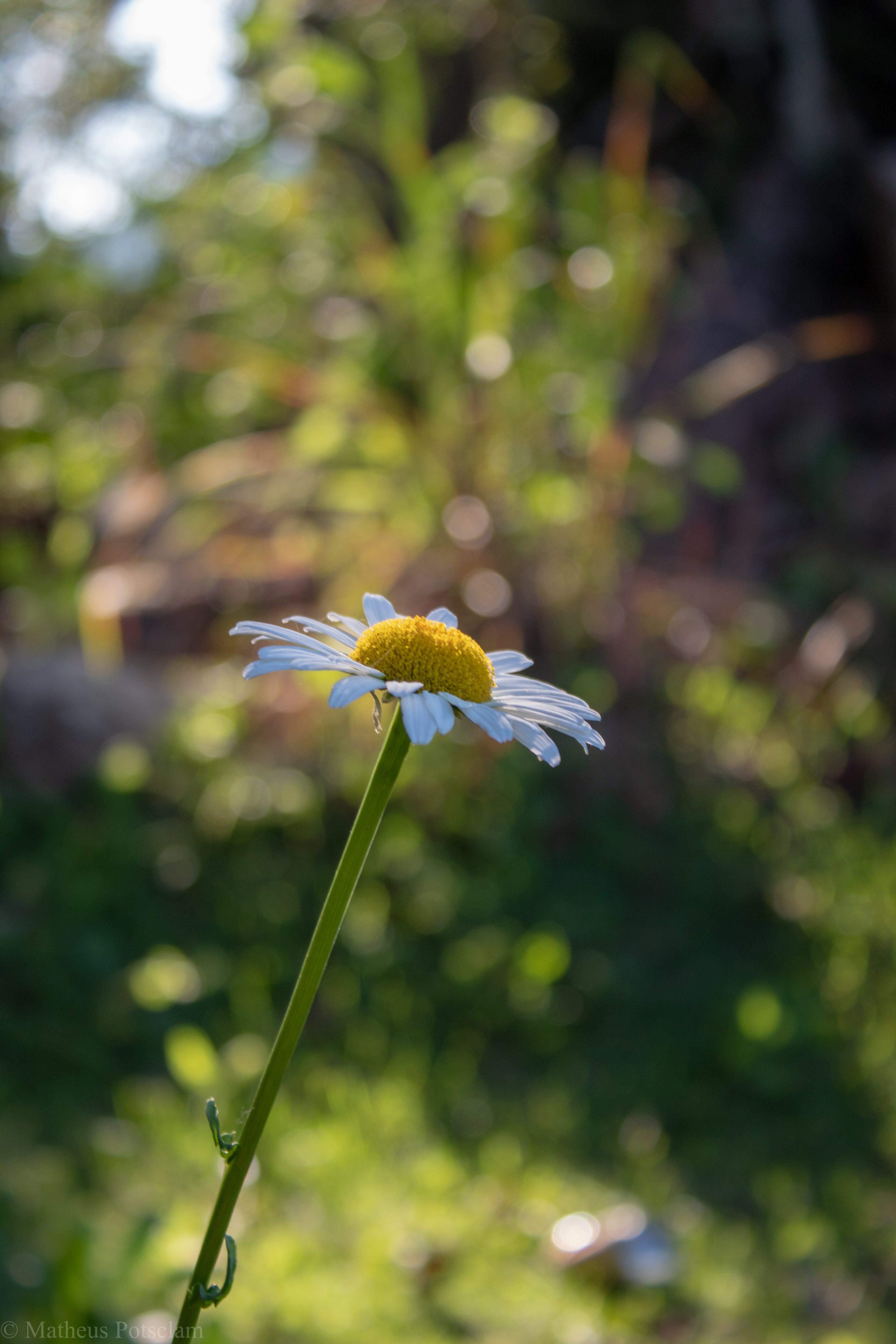 Free stock photo of afloramento, beleza na natureza, buquê de flores, flor