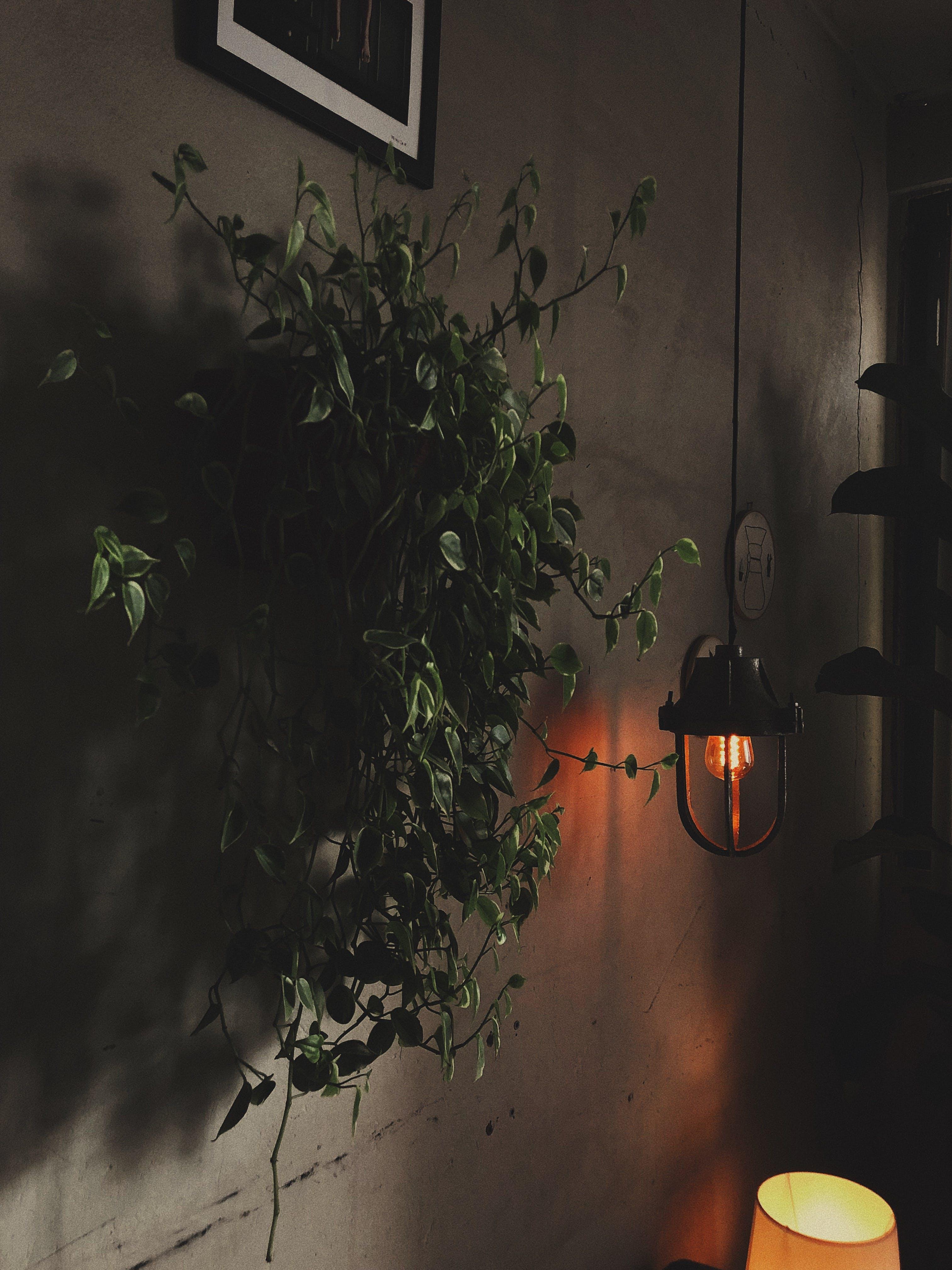 Green-leafed Plants Beside Pendant Lamp