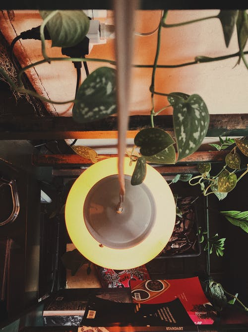 Gratis lagerfoto af cafe, epipremnum aureum, fugleperspektiv, hængende lys