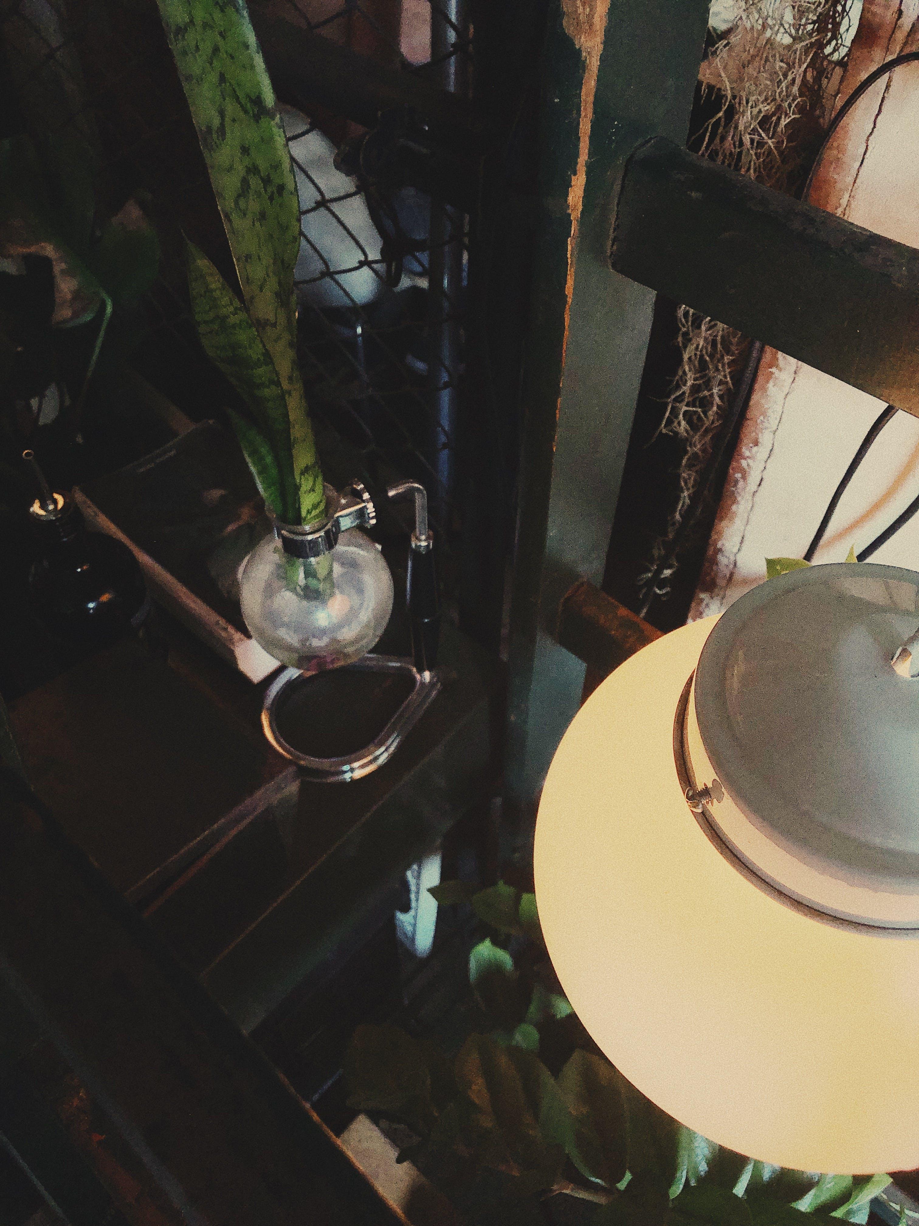 Fotos de stock gratuitas de adentro, contenedor, cristal, cuerda de cáñamo de la víbora