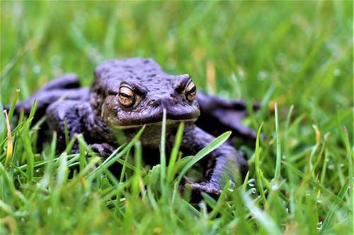 Free stock photo of amphibian, animal, animal lover