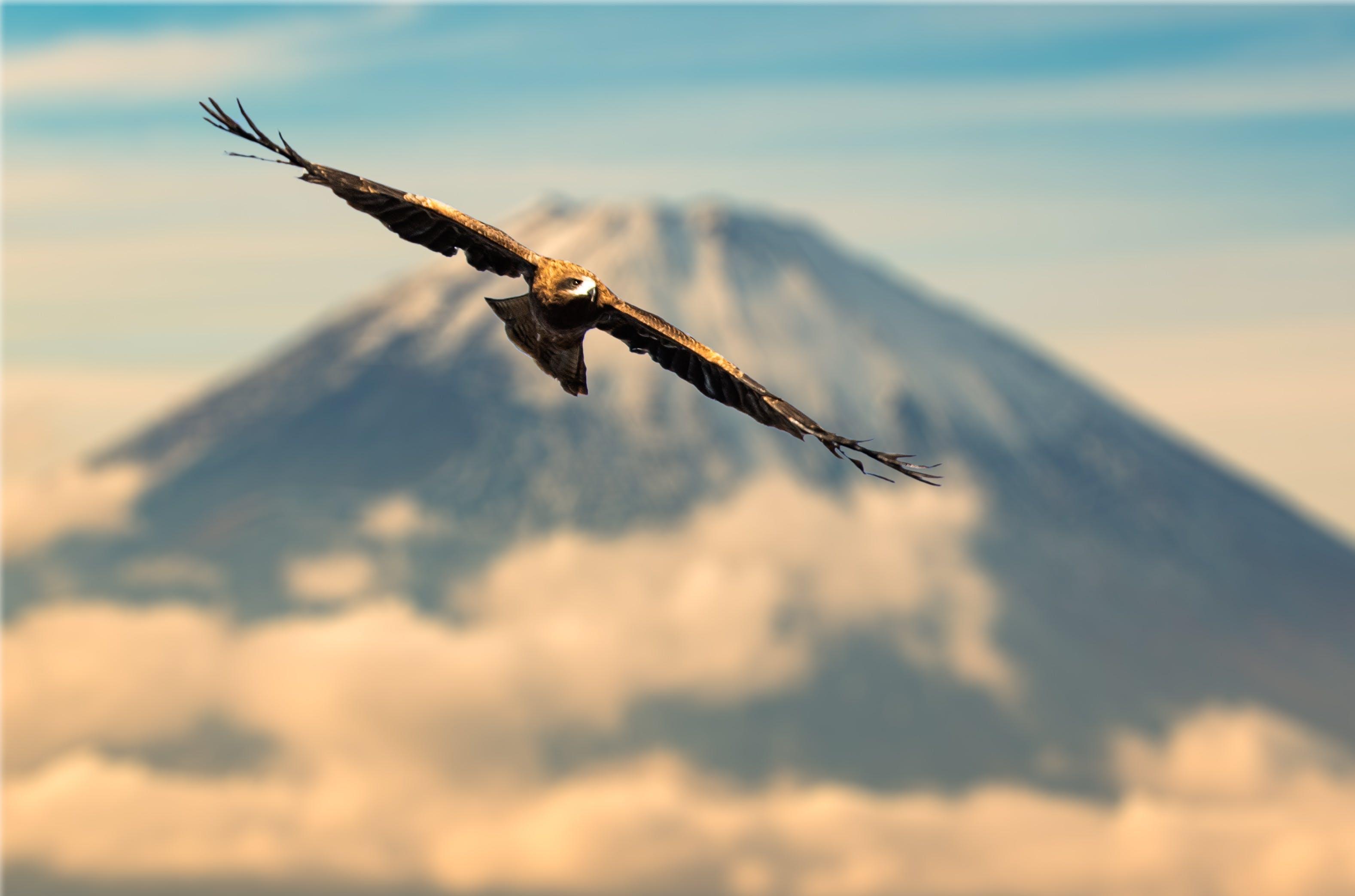 Free stock photo of bird, japan, volcano
