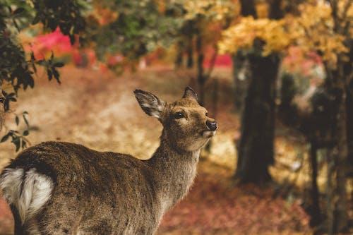 Бесплатное стоковое фото с олень