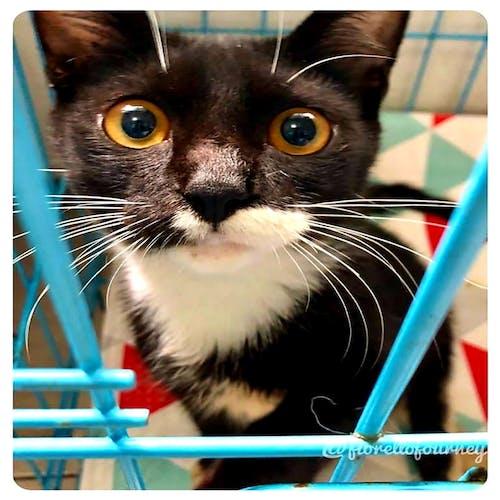 #indonesia #cat #vet #rescue #black和white 的 免費圖庫相片