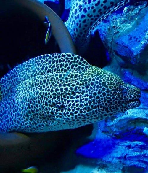 #eal #indonesia #diving #scuba #ocean 的 免費圖庫相片
