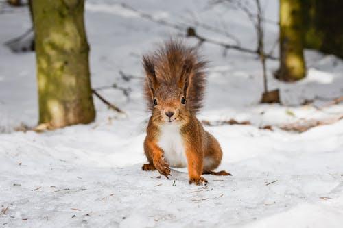Gratis stockfoto met 4k achtergrond, achtergrond, bezoek stockholm, eekhoorn