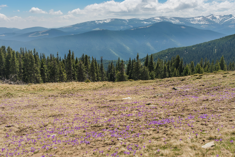 Free stock photo of 4k wallpaper, adventure, awesome, carpathian