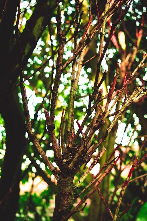 Free stock photo of branch, bright colours, bright day, dead