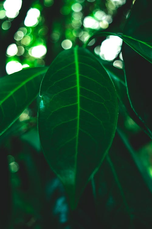 Free stock photo of details, dry, evergreen, green