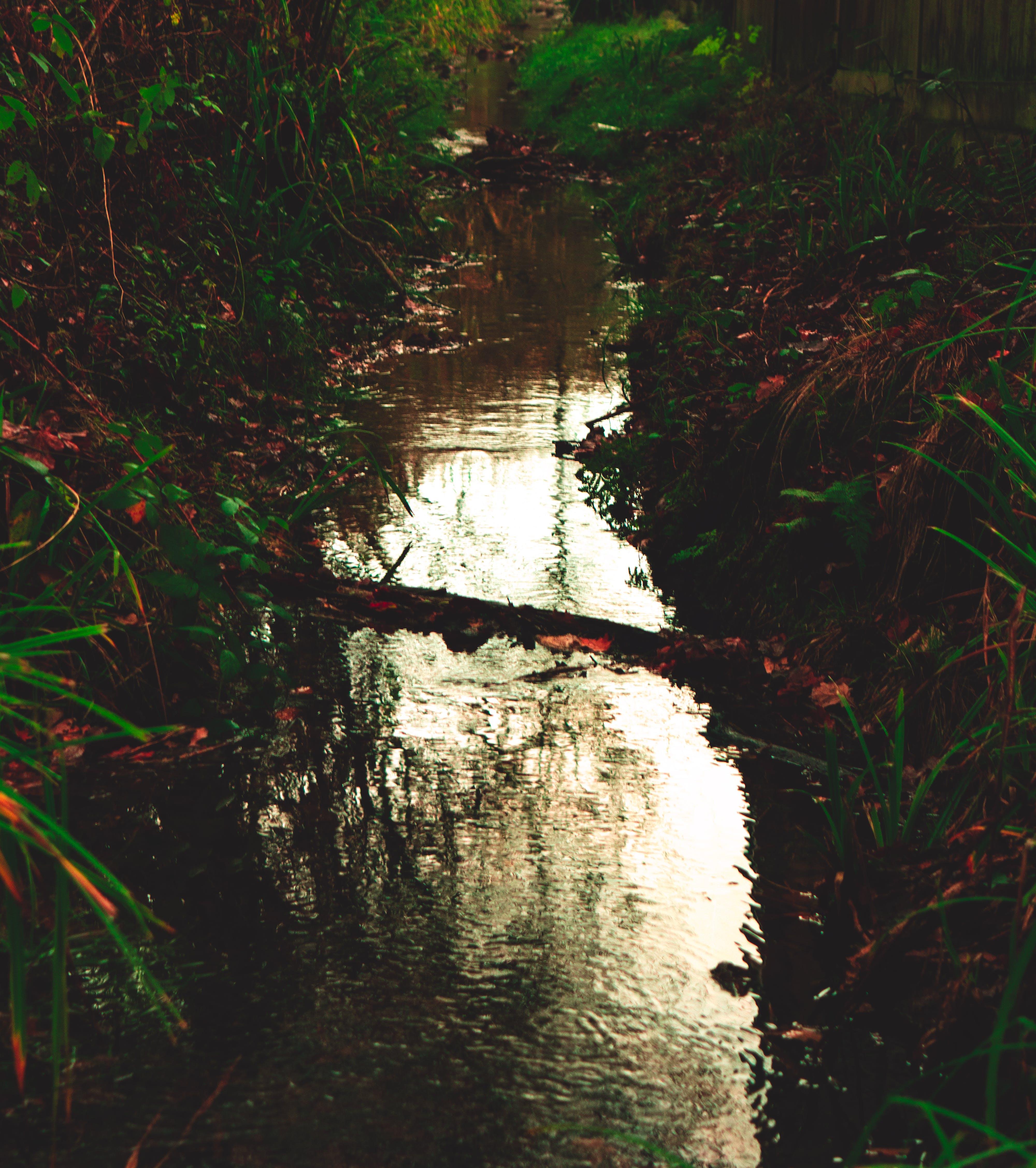 Δωρεάν στοκ φωτογραφιών με ανακλαστικός, αντανάκλαση, γέφυρα, δασική έκταση