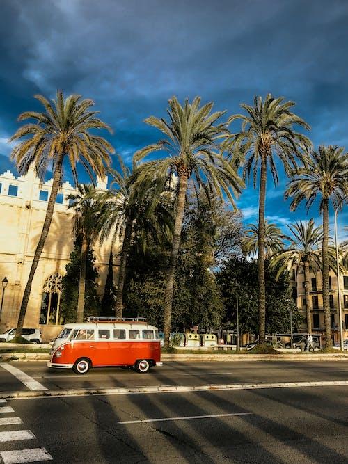 Бесплатное стоковое фото с дорога, пальмовые деревья, транспортная система, транспортное средство
