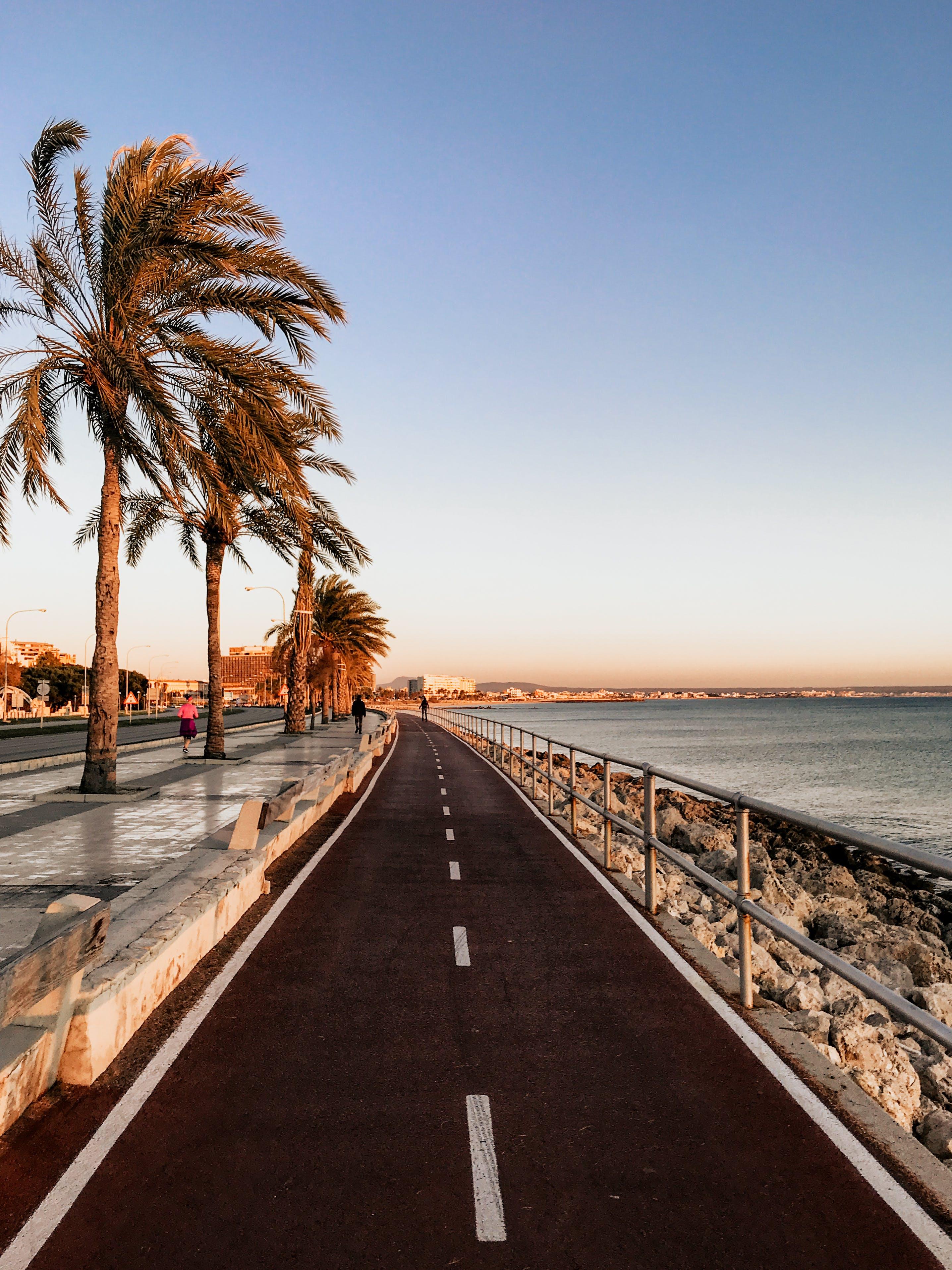 Δωρεάν στοκ φωτογραφιών με δέντρα, δρόμος, θάλασσα, Ισπανία