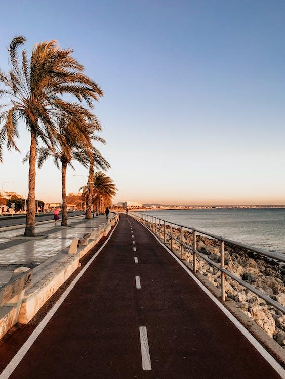 δέντρα, δρόμος, θάλασσα