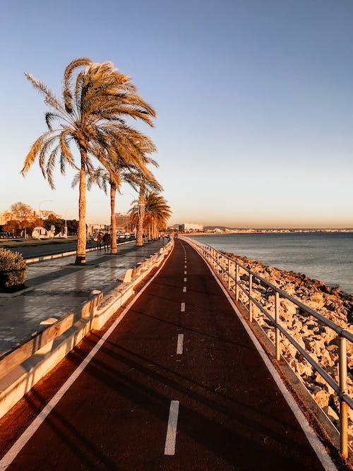 Gratis lagerfoto af hav, kyst, palmer, vej