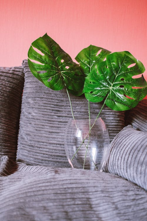 Photo of Monstera Plant On Glass Vase