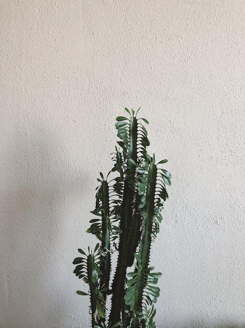 beton duvar, Beyaz arka plan, bitki, büyüme içeren Ücretsiz stok fotoğraf