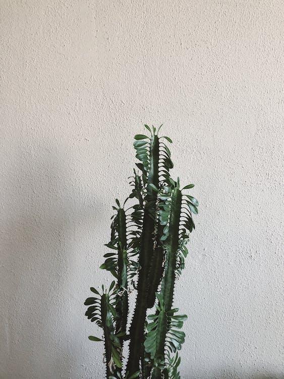 Green-Leafed Plant Near Wall