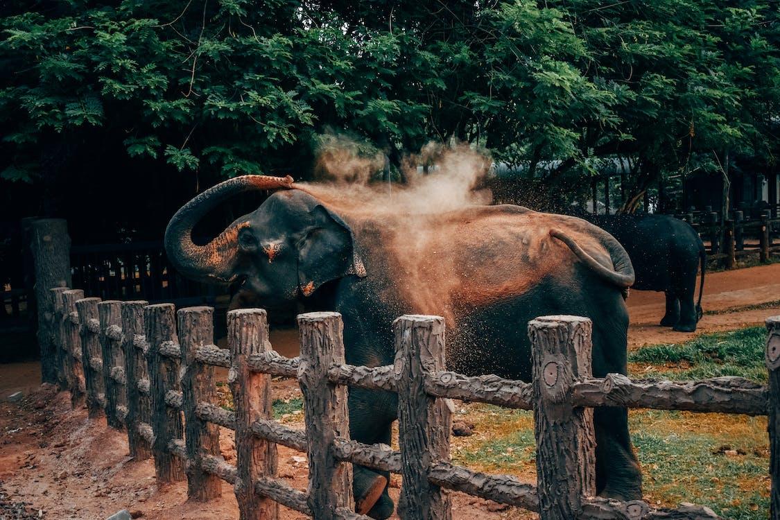 alam, belalai gajah, besar