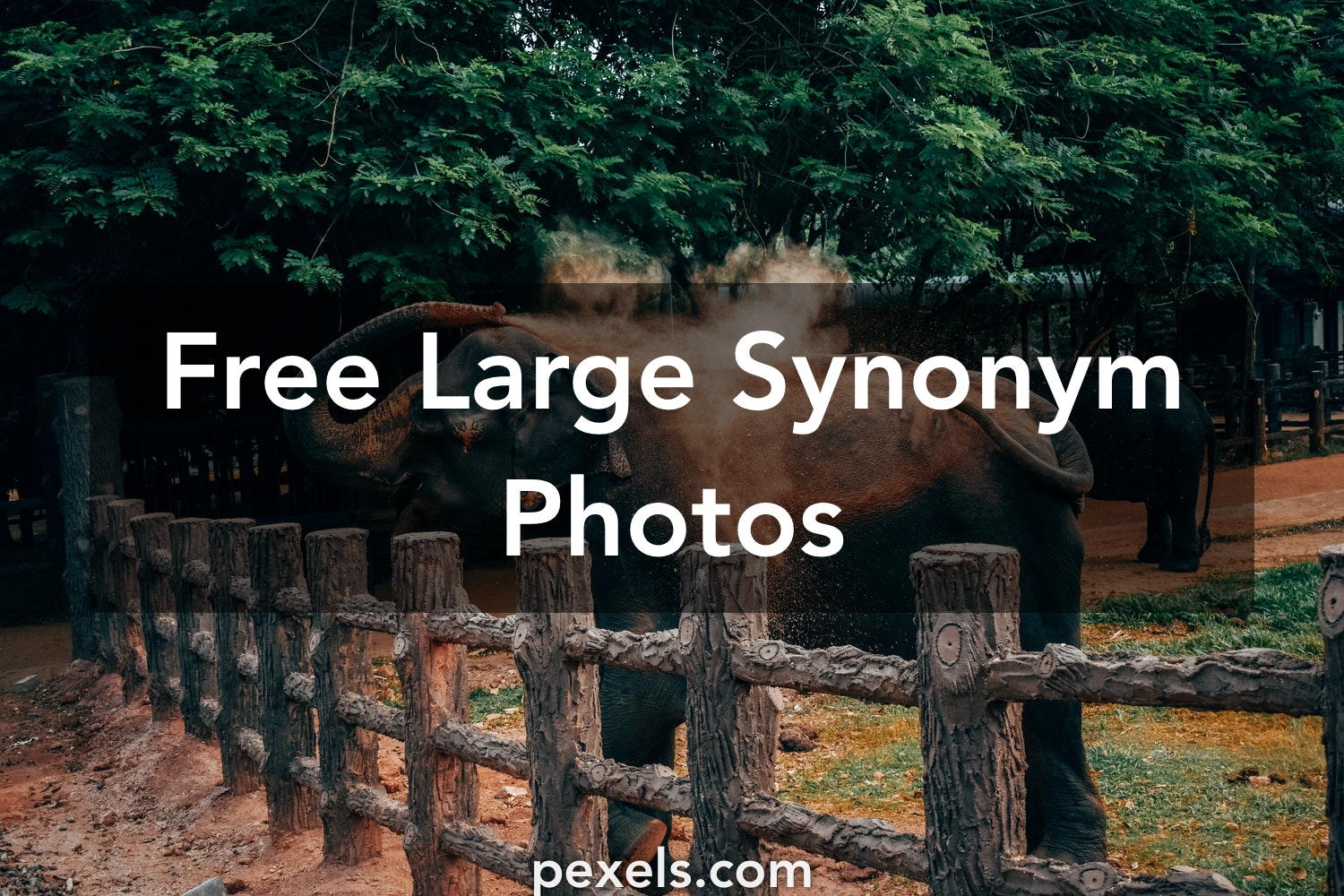 100 Amazing Large Synonym Photos Pexels Free Stock Photos