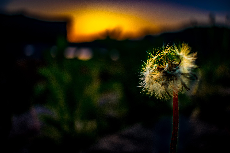 Gratis lagerfoto af landskab, nat, natur, påskelilje