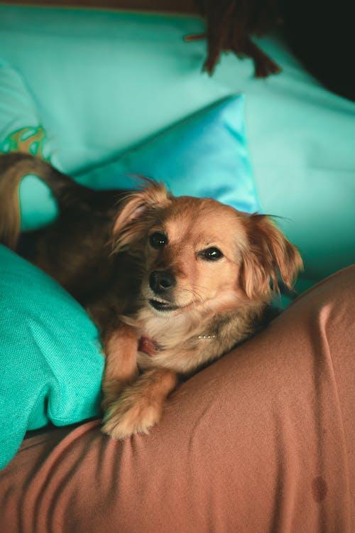 Photo of Dog Lying on Sofa
