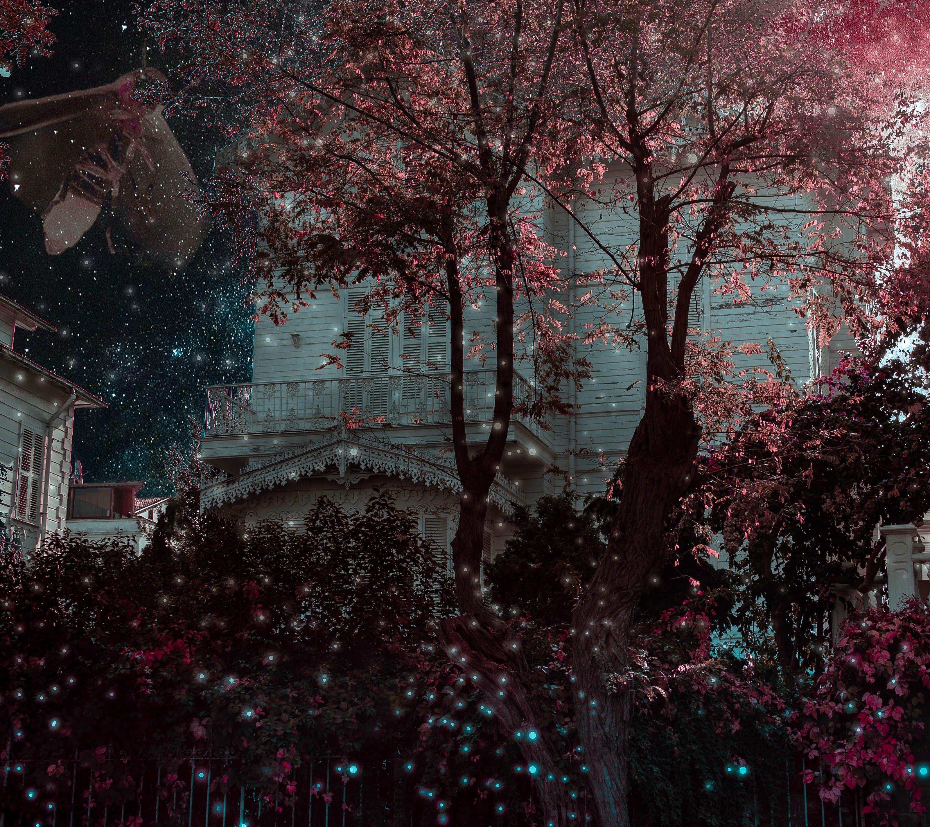 Free stock photo of Adobe Photoshop, Dark Sky, firefly, hausing