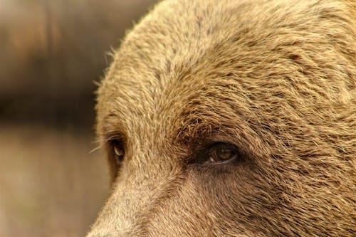 Бесплатное стоковое фото с дикая природа, дикий, животное, карие глаза