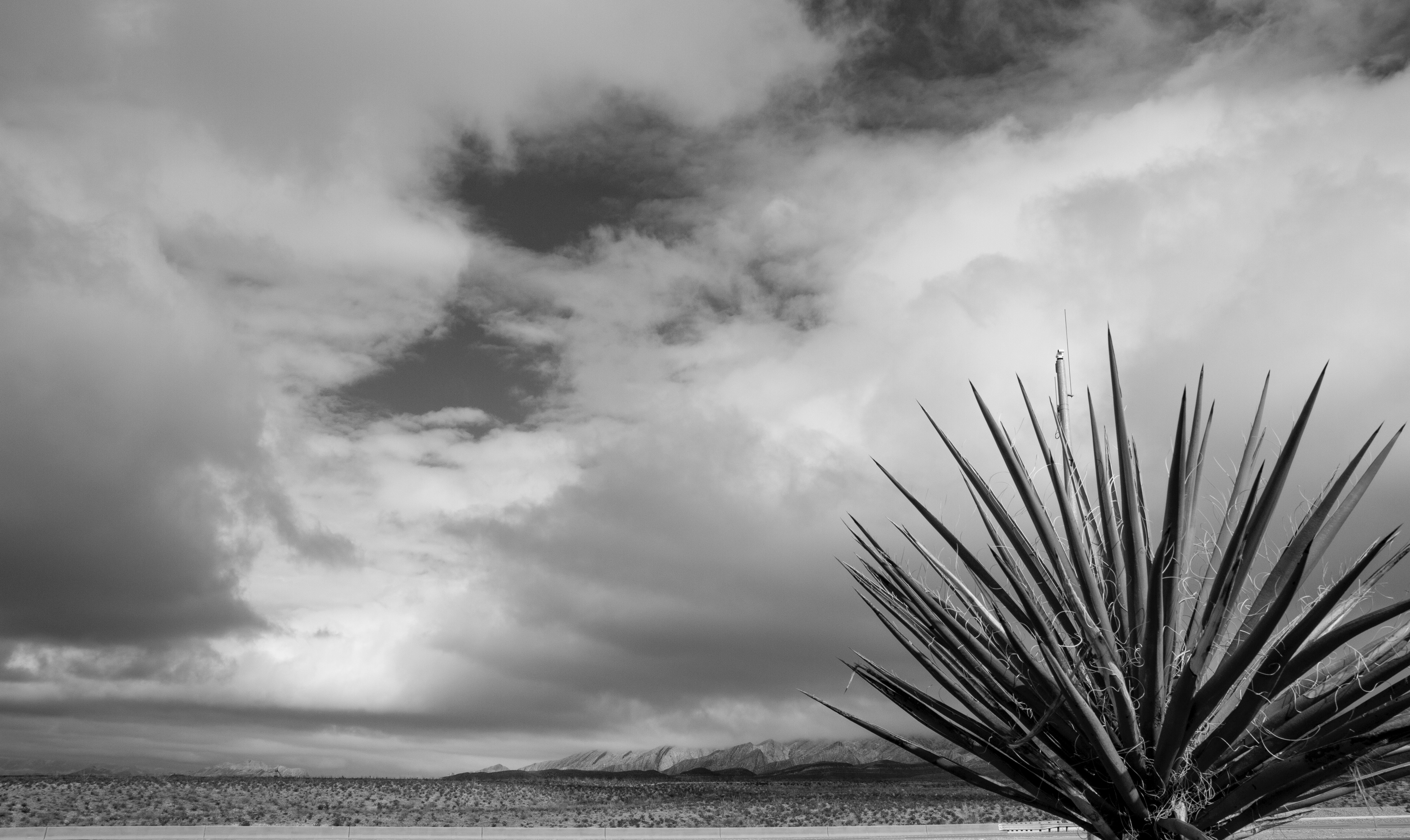 Free stock photo of black and white desert plants el paso