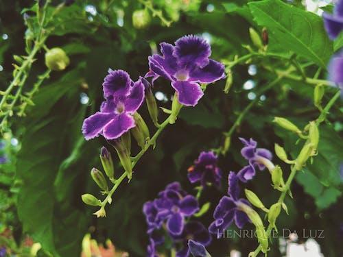 Free stock photo of flor, flower, folhas, life