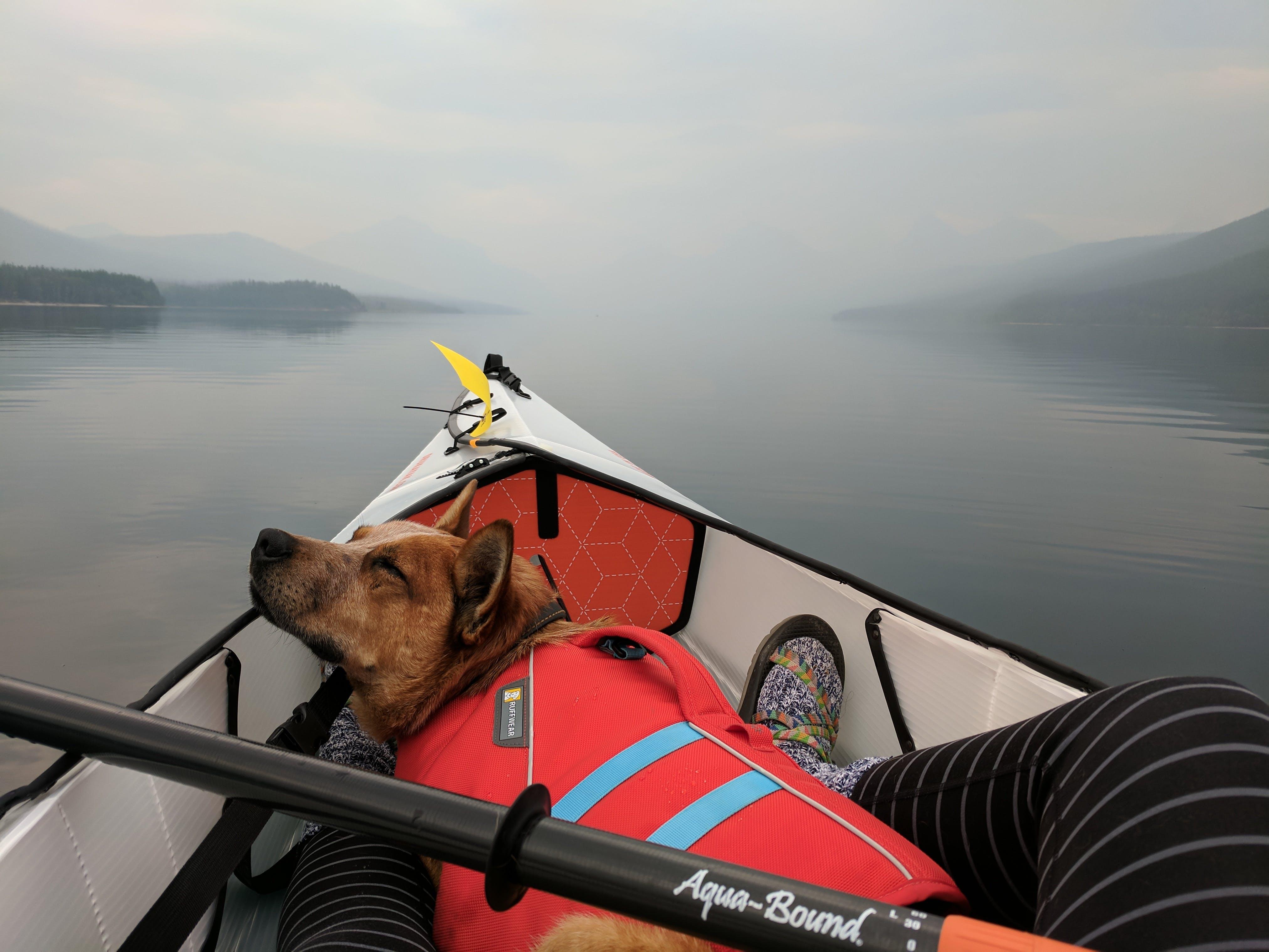 Foto profissional grátis de andar de caiaque, animal, animal de estimação, barco