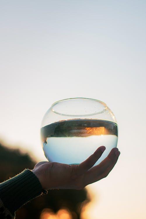 Immagine gratuita di acqua, bicchiere, ciotola di pesce, macro