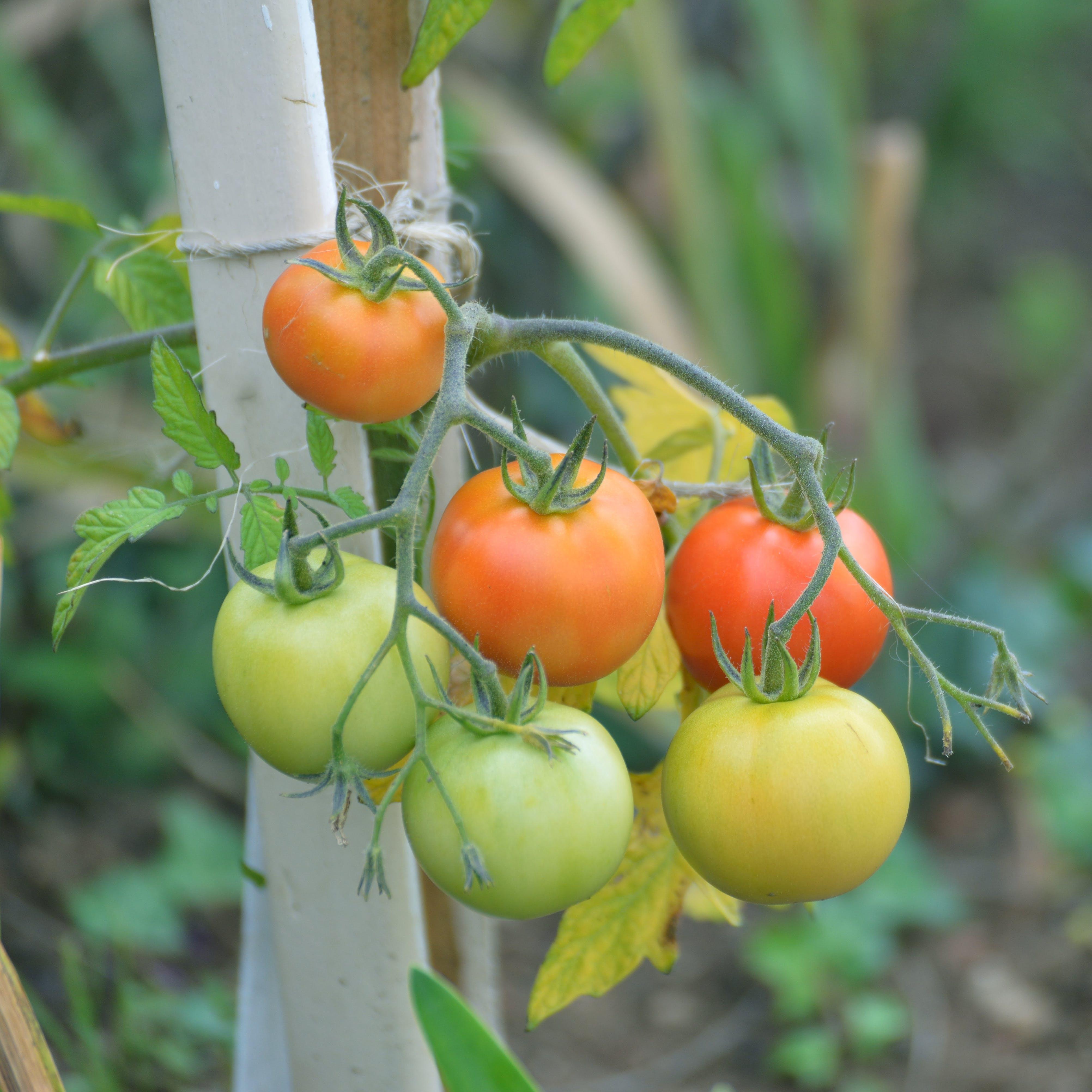 Free stock photo of agriculture, alimentation, bio, dietetique