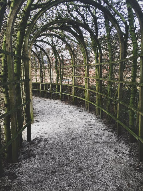 トンネル, トンネルビュー, パーク, ロマンチックの無料の写真素材