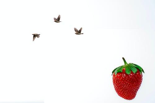 新鮮水果, 草莓, 藝術 的 免費圖庫相片