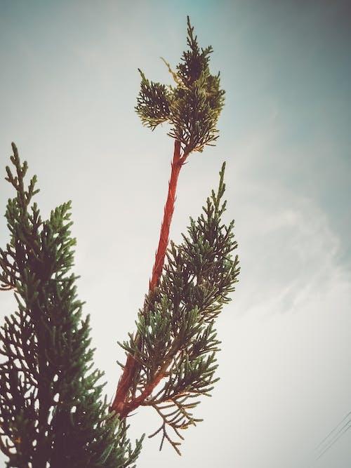 Ilmainen kuvapankkikuva tunnisteilla ikivihreä, kasvu, kirkas, kukinta