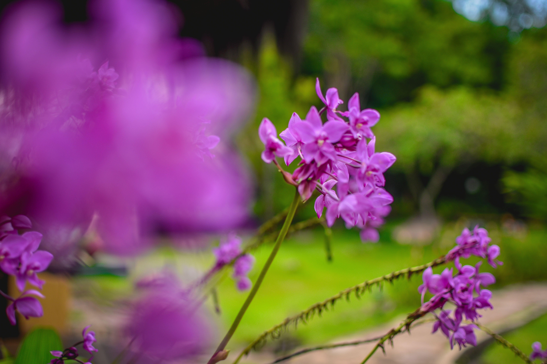 Free stock photo of flowers, orchids, orquidea