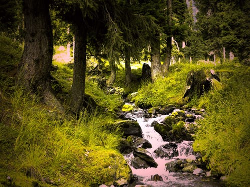 Free stock photo of beauty in nature, blue mountains, kashmir