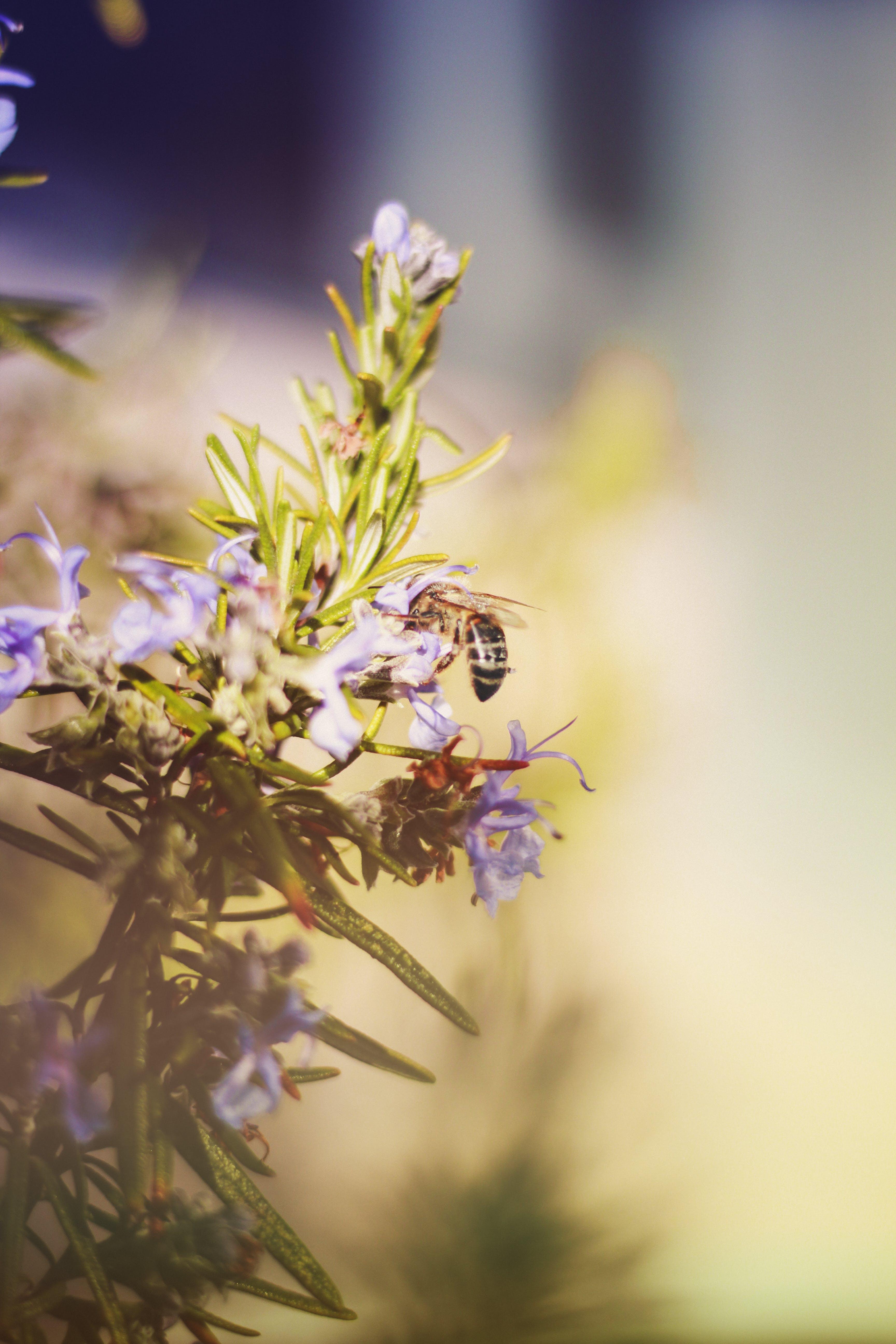 Kostenloses Stock Foto zu biene, blumen, blütenblätter, flora