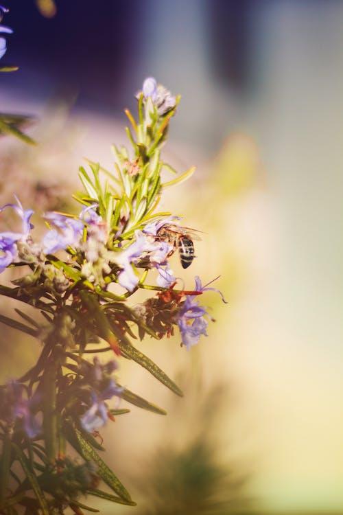 Photos gratuites de abeille, centrale, fleurs, flore