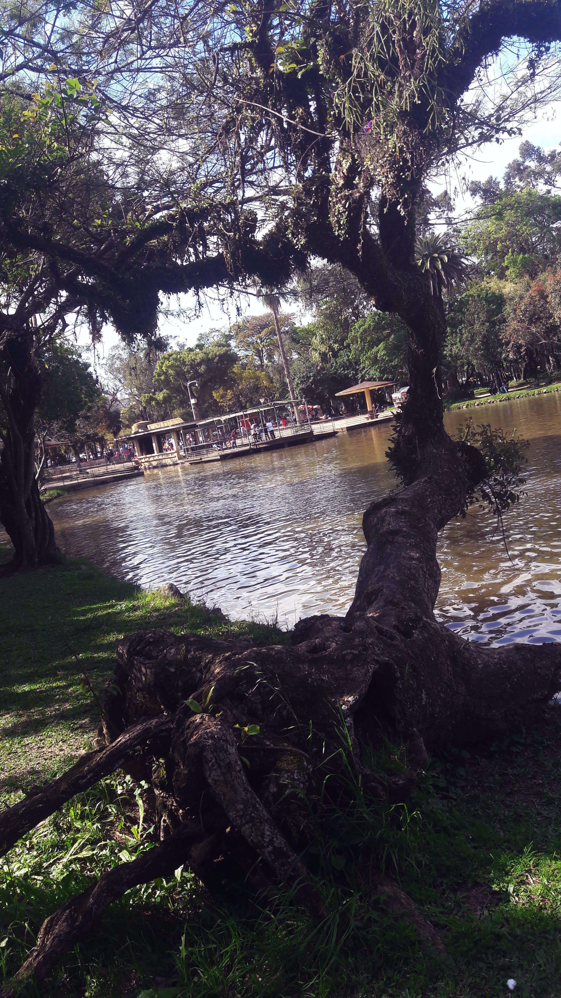 Free stock photo of park, tree