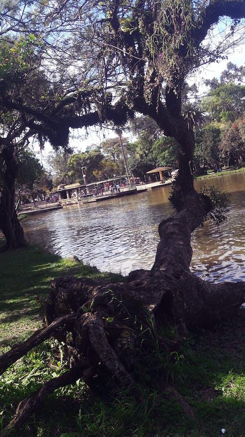 Kostnadsfri bild av park