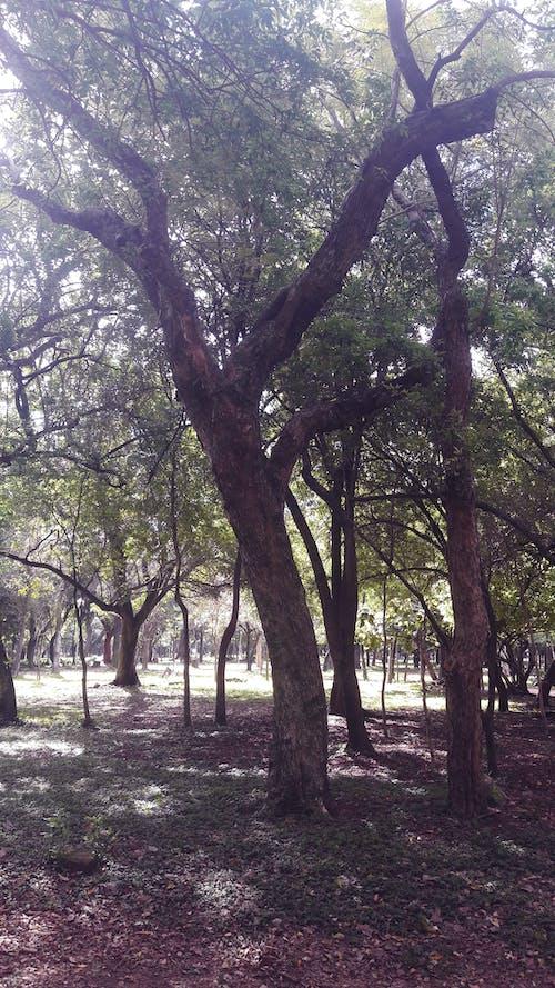Kostnadsfri bild av park, skog, träd